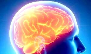 Анатомія і фізіологія головного мозку