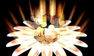 Аромамасла для залучення грошей: магічна сила ароматів