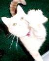 Фото - Хвороба котячих подряпин