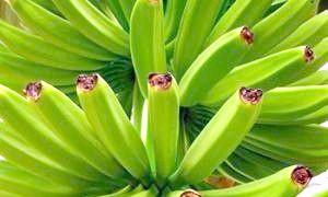 Де ростуть банани і звідки прийшли на наш стіл ці екзотичні фрукти