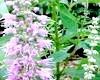 Лікарські трави - не потрапляючи на гачок шарлатанів