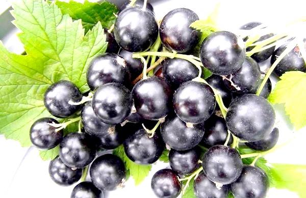 Фото - Чорна смородина багата вітамінами