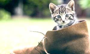 Як позбутися запаху котячої сечі, якщо вихованець зіпсував килим чи одяг