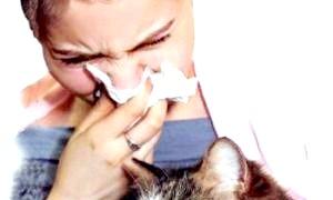 Як відрізнити алергію на кішок від інших захворювань?