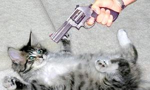 Фото - Як відучити кота гадити де попало: еффектвние методи