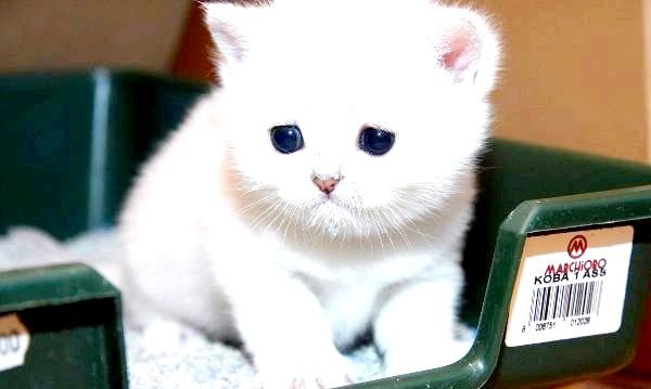 Фото - Краще привчати кота до туалету з перших днів