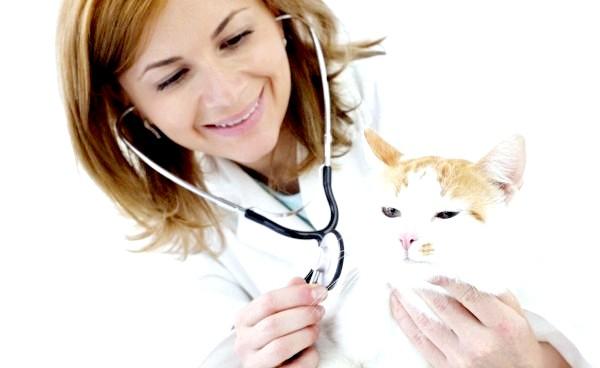 Фото - Обов'язково покажіть кота ветеринара, якщо його поведінка різко змінилося
