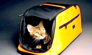 Як перевезти кішку на далеку відстань: що взяти з собою і як заспокоїти вихованця