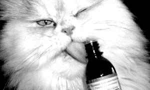 Як пити валер'янку: дозування і протипоказання