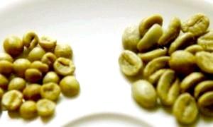 Як правильно заварювати зелений кави і що дає цей новомодний напій