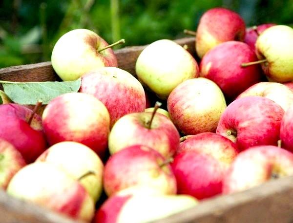 Фото - Яблучне вино - це досить просто і дуже смачно