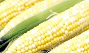 Як варити кукурудзу?