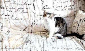 Фото - Як вивести запах котячої сечі з дивана і з килима швидко і назавжди