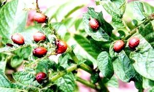 Як захистити рослини від шкідників?