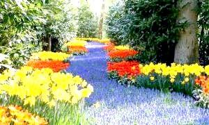 Які квіти краще використовувати для односезонні озеленення?