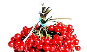 Калина: користь і шкода цілющою ягоди