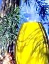 Фото - кедрова олія