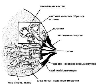 Фото - Прояв захворювання в клінічній практиці