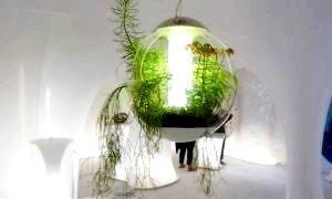 Лампа денного світла для рослин: навіщо потрібна і як використовувати