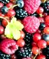 Лісові рослини з їстівними плодами: близьке знайомство