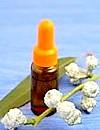 Масло евкаліпта: природний дезінфектор