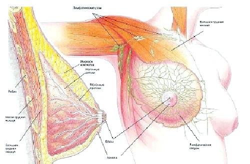 Мастопатія фіброзно-кістозна: етіологія, патогенез і діагностика