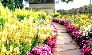 Багаторічні квіти для клумби: для тінистого саду і сонячних рівнин
