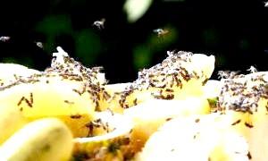 Фото - Звідки беруться мошки на фруктах при зберіганні вдома