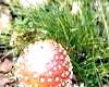 Отруєння грибами - Не попадіться на гачок