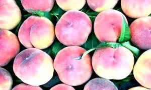 Персикове масло для особи: натуральний екстракт краси і молодості