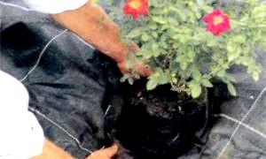 Плівка в якості захисника від хвороб рослин