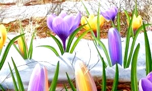 Чому березня назвали березнем, або походження найменувань місяців весни