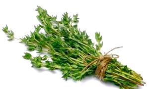 Корисні властивості чебрецю і протипоказання - трави в нашому житті