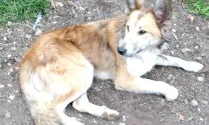 Втрачені собаки - наше дзеркало?