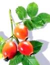 Рослини з цукрознижувальними властивостями: майже інсулін, тільки краще