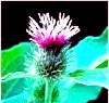 Реп'яхову олію для зміцнення волосся: ефективний засіб
