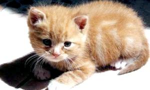Річард, фауст або васька: як назвати кошеня-хлопчика?
