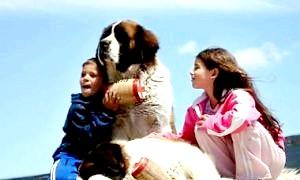Сама добра порода собак - вибираємо одного для всієї родини
