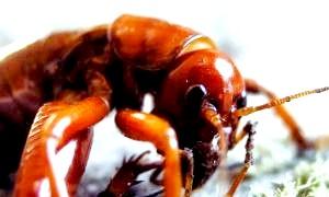 Найнебезпечніші комахи в світі: мініатюрні вісники апокаліпсису