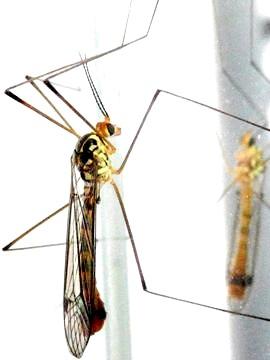 Фото - Малярійним може бути будь комар - заражений