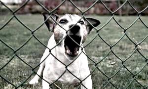 Найнебезпечніші собаки в світі: чихуахуа, спанієлі та лабрадори