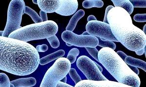 Скільки мікроорганізмів живе на тілі людини?