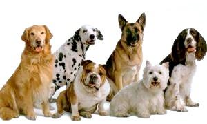 Догляд за шерстю собаки