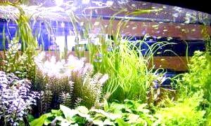 Водні рослини для акваріума