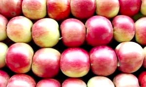 Шкода польських яблук підтверджений декількома висновками Россільгоспнагляду