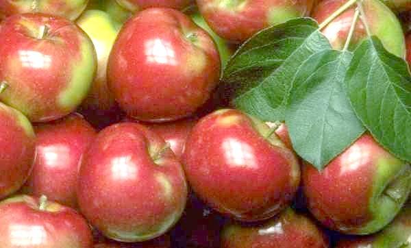 Фото - Яблука, покриті воском