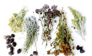 Фото - Трави для лікування захворювання