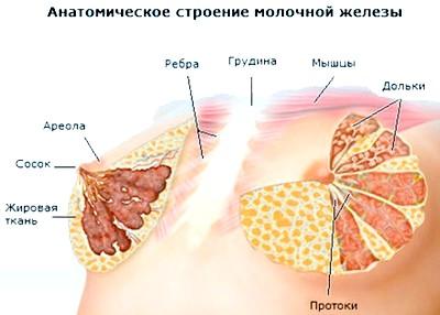 Вузлові форми мастопатії - симптоматика і методи лікування