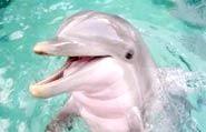 Що таке дельфінотерапія?