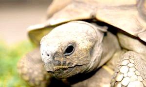 Фото - Щоб вихованець був здоровим: як доглядати за черепахою в домашніх умовах